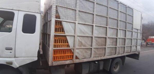 توقیف 21 دستگاه کامیون حامل مرغ فاقد مجوز در رودبار